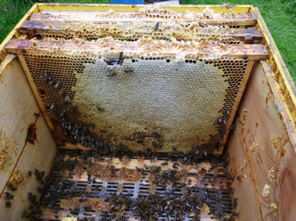 Pokazy wyrobu świec z wosku pszczelego
